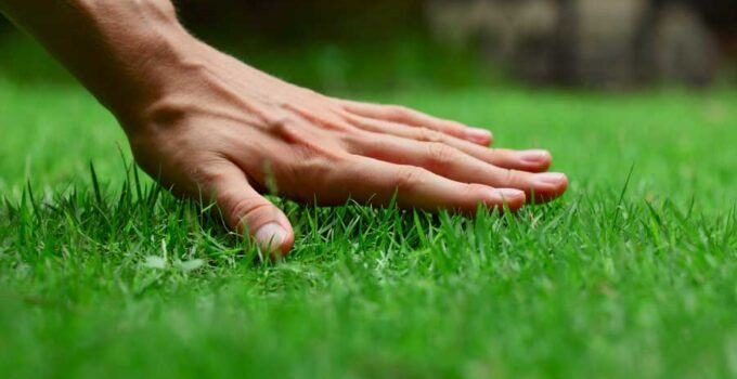 How Much Grass Seed Do I Need?